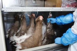 捕獲量が多い時期には施設の冷蔵庫がいっぱいになることも